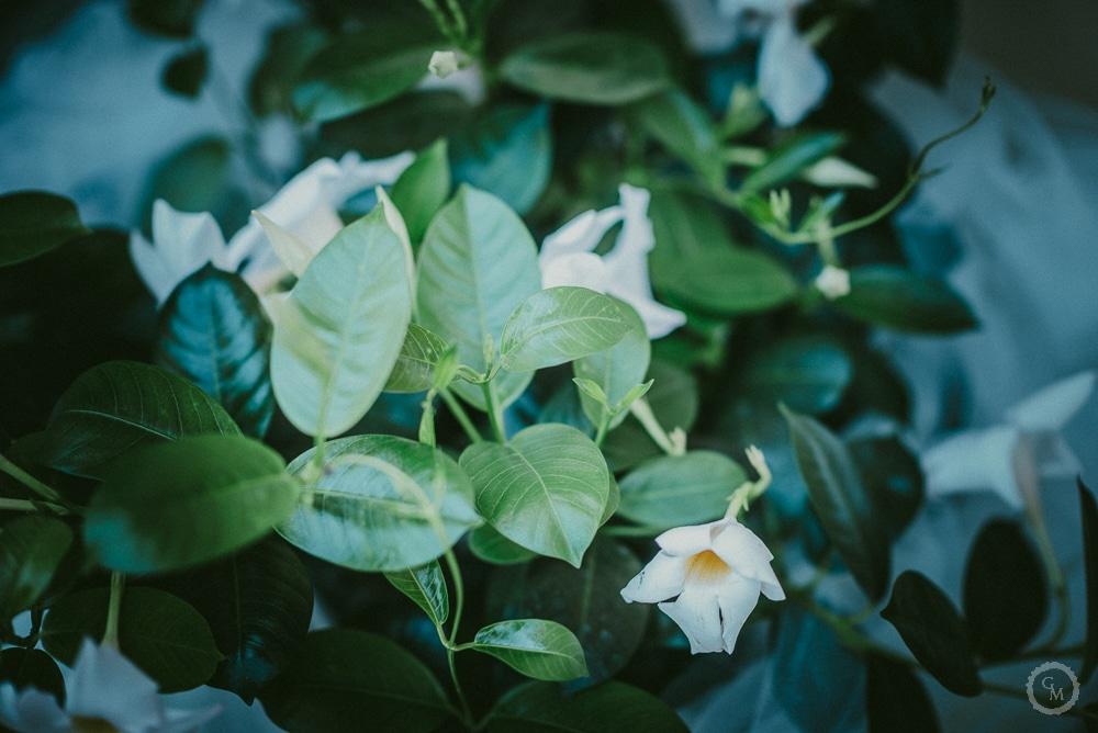 addobbi floreali san miniato