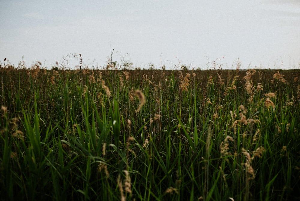 riserva-naturale-massaciuccoli